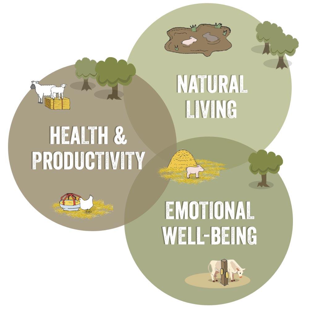 Az állatjólét három fő összetevője: természetszerű tartás, egészség és produktivitás, valamint érzelmi jólét
