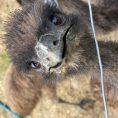 Emu-Big-Brother, avagy hogyan tudunk ránézni az állatainkra akkor is, amikor épp nem vagyunk ott?